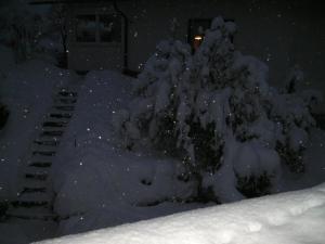 Schwarzwald bei Nacht