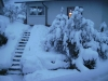 Schwarzwald im Schnee 1